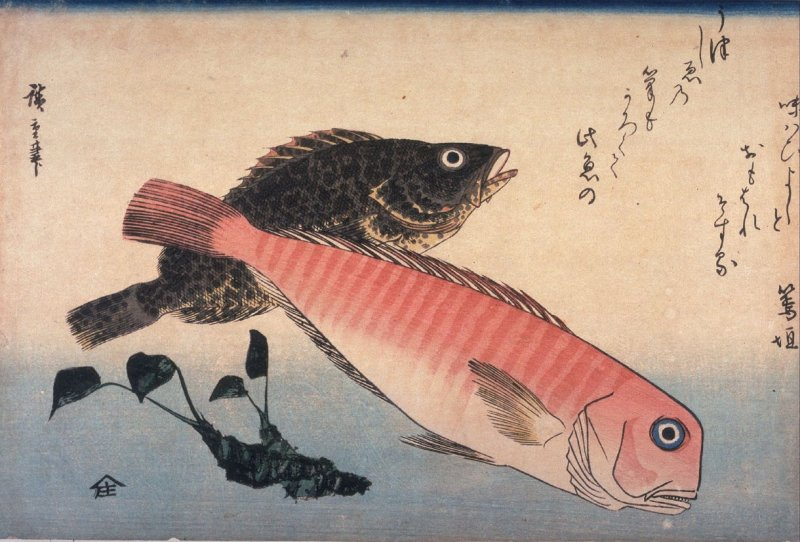 Untitled ( Amadai, Mebaru and Wasabi Root) one from a series of large fish
