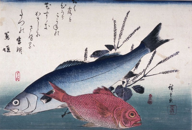 Untitled (Suzuki, Kimmedai, Shiso), one from a series of large fish