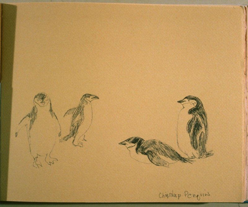 Chinstrap Penguins, eighteenth image from Travel Sketchbook of Antarctica