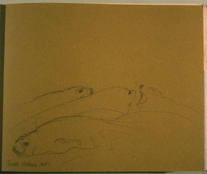 Female Elephant Seals, sixteenth image from Travel Sketchbook of Antarctica