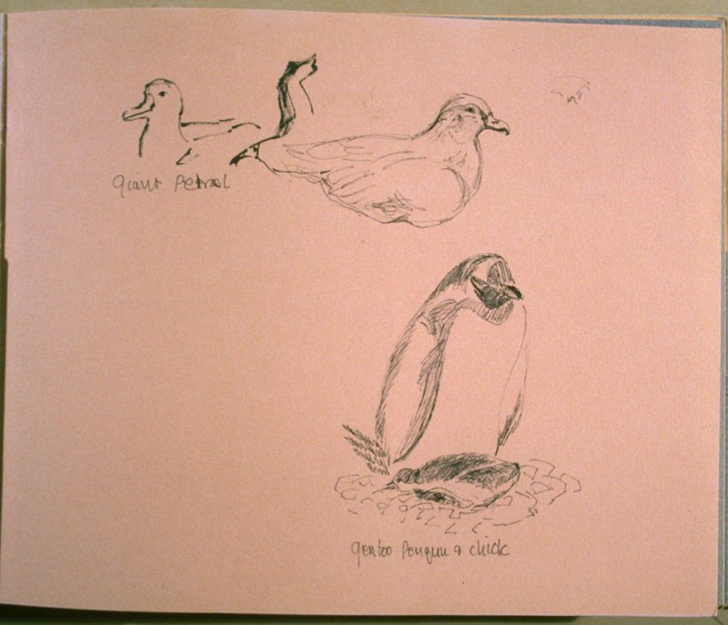 Giant Petrels and Gentoo Penguin and Chick, twelfth image from Travel Sketchbook of Antarctica