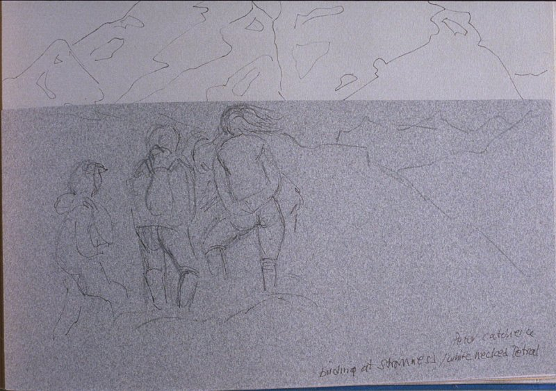 Birding at Stromness, Peter Catches White Necked Petrel, fifty-ninth image from Travel Sketchbook of Antarctica