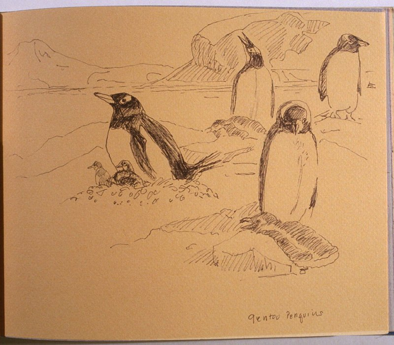 Gentoo Penguins, thirty-sixth image from Travel Sketchbook of Antarctica