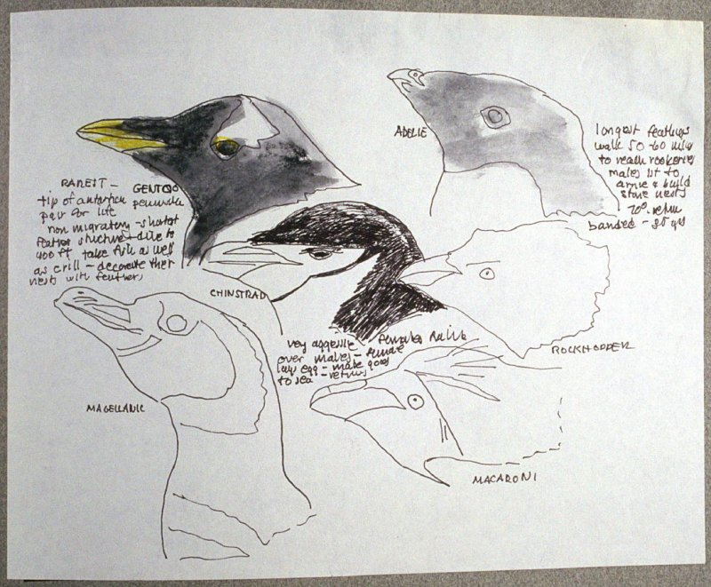 Studies of Penguins, seventy-sixth image from Travel Sketchbook of Antarctica