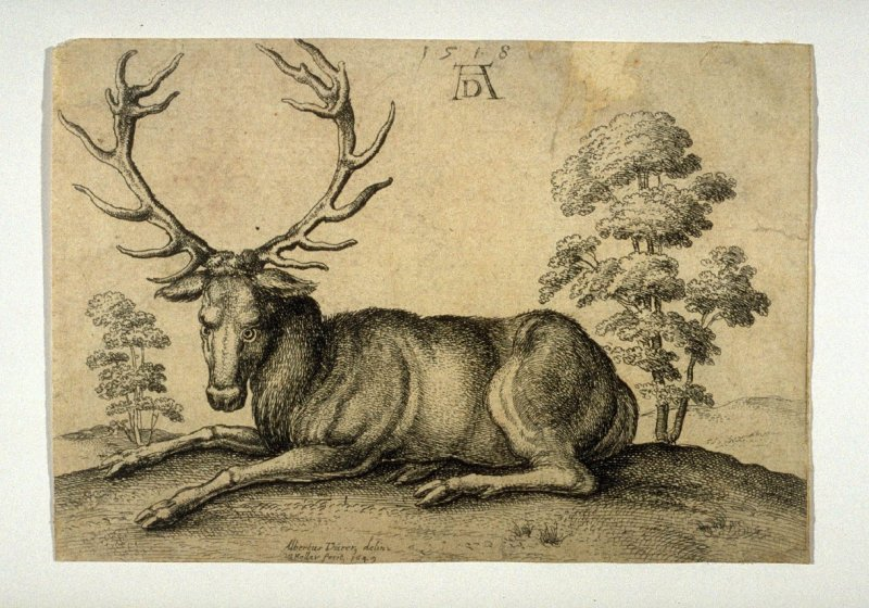 Stag Lying to Left