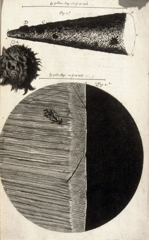 Scheme 2 [II], first plate, opposite page 2 in the book, Micrographia: or some physiological Descriptions of minute Bodies made by Magnifying Glasses. With Observations and Inquiries thereupon (London: printed by Jo. Martyn and Ja. Allestry, printers to t