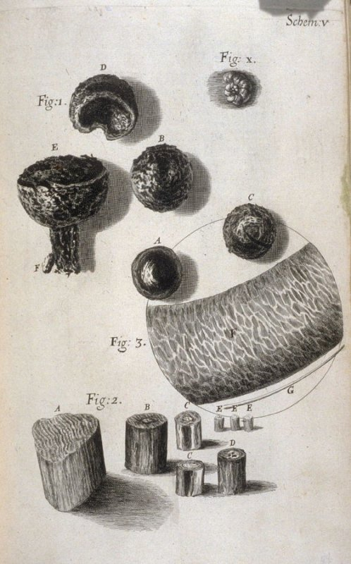 Scheme V, fifth plate, opposite page 44 in the book, Micrographia: or some physiological Descriptions of minute Bodies made by Magnifying Glasses. With Observations and Inquiries thereupon (London: printed by Jo. Martyn and Ja. Allestry, printers to the R