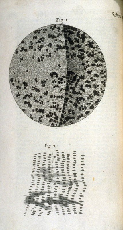 Scheme X, tenth plate, opposite page 107 in the book, Micrographia: or some physiological Descriptions of minute Bodies made by Magnifying Glasses. With Observations and Inquiries thereupon (London: printed by Jo. Martyn and Ja. Allestry, printers to the