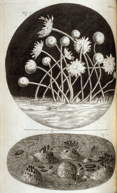 Scheme XII, thirteenth plate, opposite page 125 in the book, Micrographia: or some physiological Descriptions of minute Bodies made by Magnifying Glasses. With Observations and Inquiries thereupon (London: printed by Jo. Martyn and Ja. Allestry, printers