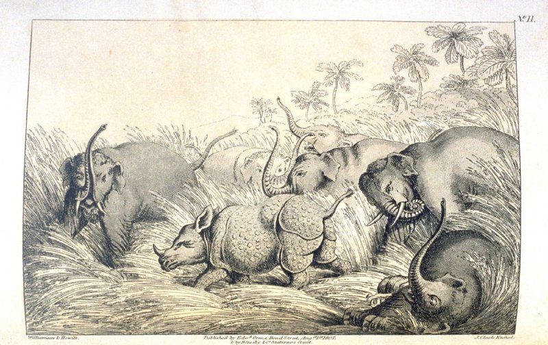 A Rhinoceros Bayed by Elephants, pl. 11 in the book, Oriental Field Sports … (London: Edward Orme and B. Crosby and Co., 1808), vol. 1