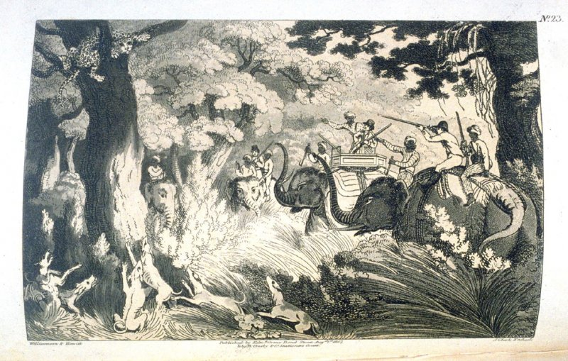 Shooting a Leopard in a Tree, pl. 23 in the book, Oriental Field Sports … (London: Edward Orme and B. Crosby and Co., 1808), vol. 2