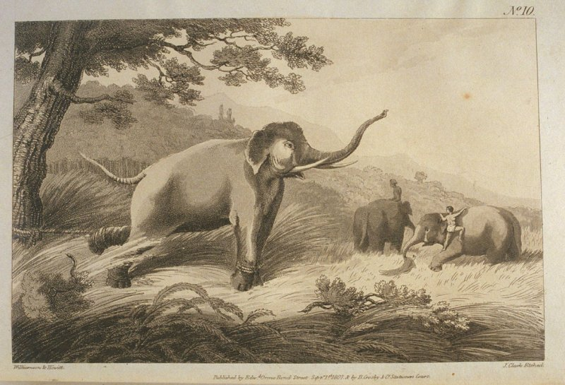 Koomkie Leaving the Male, (fastened to a tree) , pl. 10 in the book, Oriental Field Sports … (London: Edward Orme and B. Crosby and Co., 1808), vol. 1