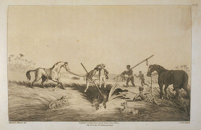 The Dead Hog, pl. 6 in the book, Oriental Field Sports … (London: Edward Orme and B. Crosby and Co., 1808), vol. 1