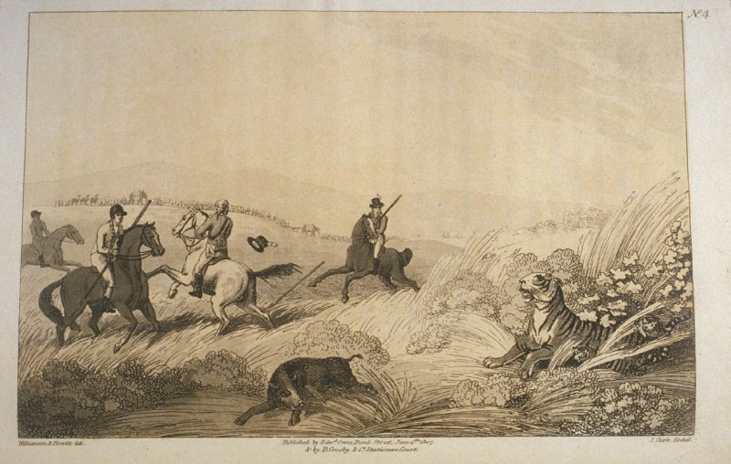 Hunters Coming by Surprise on a Tigress and Cubs, pl. 4 in the book, Oriental Field Sports … (London: Edward Orme and B. Crosby and Co., 1808), vol. 1