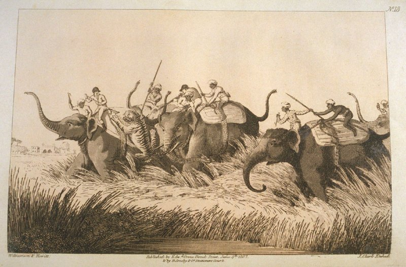 A Tiger Springing on an Elephant, pl. 18 in the book, Oriental Field Sports … (London: Edward Orme and B. Crosby and Co., 1808), vol. 1