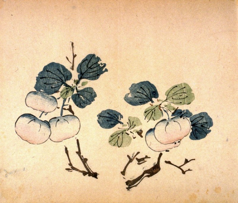 Branch of Apples(?), No.8 from the Volume on Fruit - from: The Treatise on Calligraphy and Painting of the Ten Bamboo Studio
