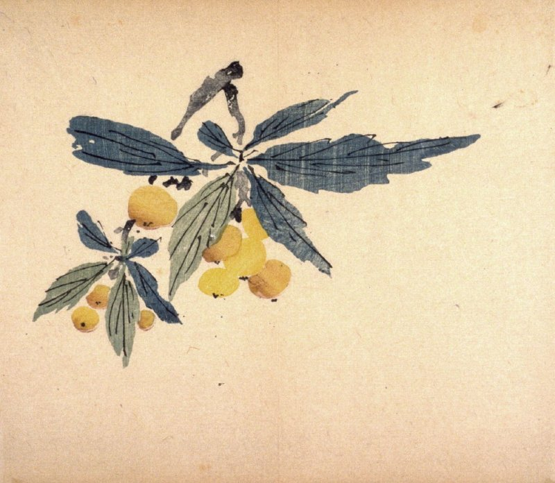 Branch of Loquats, No.12 from the Volume on Fruit - from: The Treatise on Calligraphy and Painting of the Ten Bamboo Studio