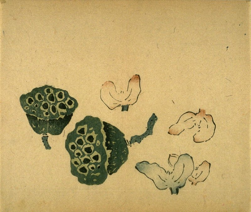 Two Lotus Pods, Four Water Caltrops, No.5 from the Volume on Fruit - from: The Treatise on Calligraphy and Painting of the Ten Bamboo Studio