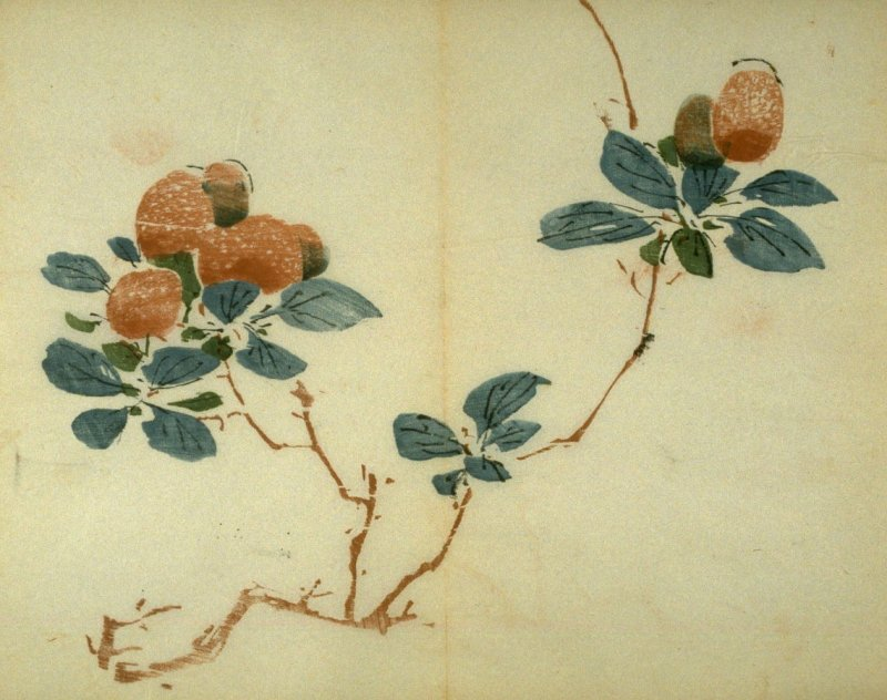 Double Branch of Litchi Nuts, No.16 from the Volume on Fruit - from: The Treatise on Calligraphy and Painting of the Ten Bamboo Studio
