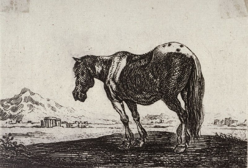 [Horse, from] Series of Six Etchings of Animals