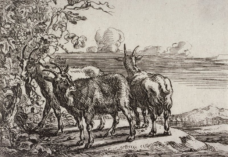 [Two goats, from] Series of Six Etchings of Animals