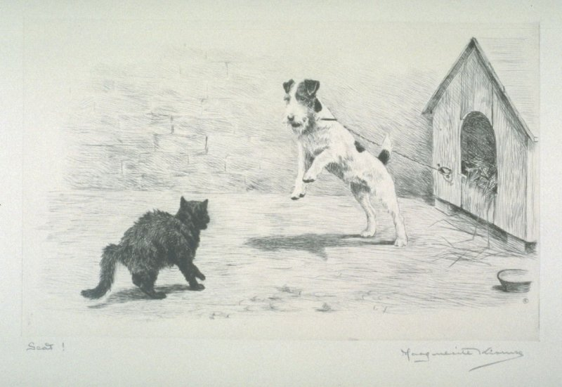 Scat! Terrier chained to his hut, straining to reach a black cat