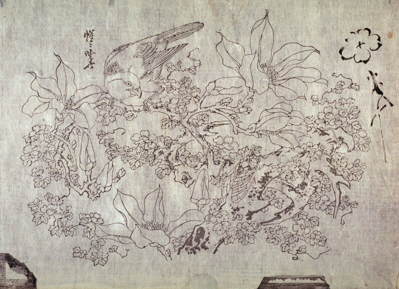 Untitled (Parrot and Cicada on Magnolia, sketch of Plum Blossom) thirteenth of a group of thirteen proofs from the key blocks of fan prints combining genre and floral studies