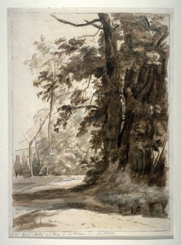 Study Of A Tree, No.11 from the second part of the series 'Liber Studiorum of Claude lorraine by F.C. Lewis'