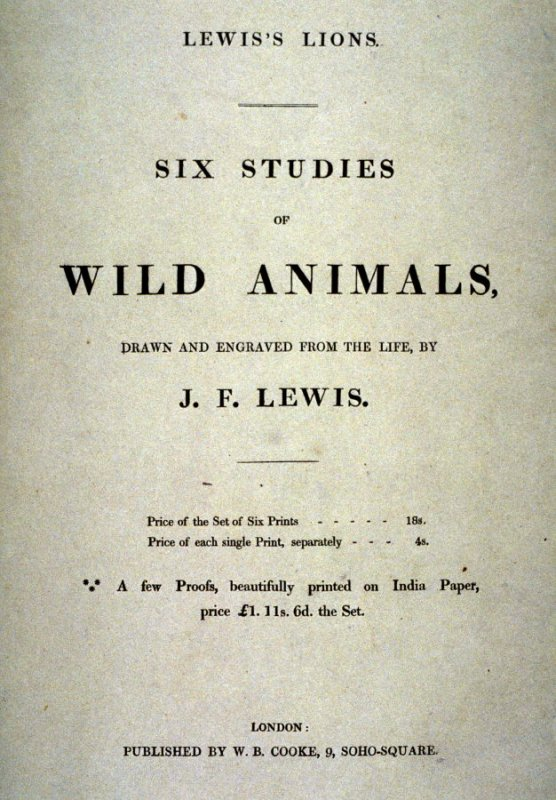 Cover for Lewis' Lions - Six Studies of Wild Animals