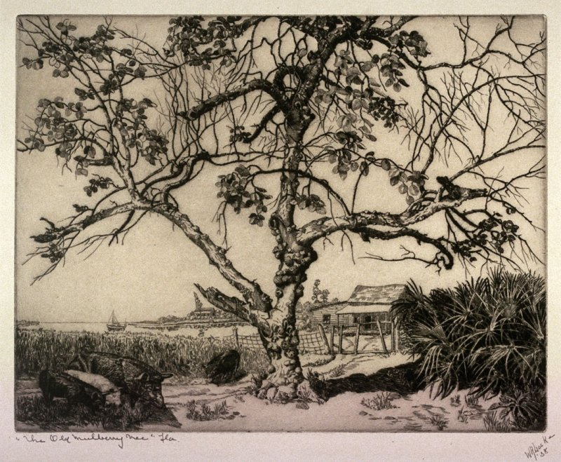 The Old Mulberry Tree