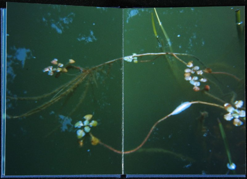 Untitled, fifth double page image in the book Interstice (San Francisco, 2004)