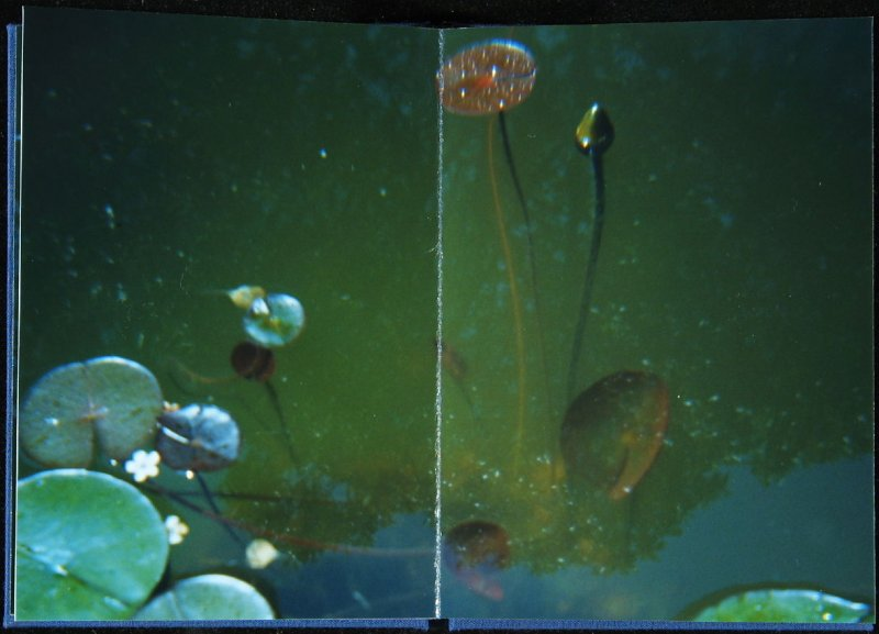 Untitled, sixth double page image in the book Interstice (San Francisco, 2004)