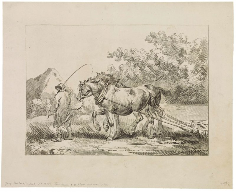 Two horses with plow and man