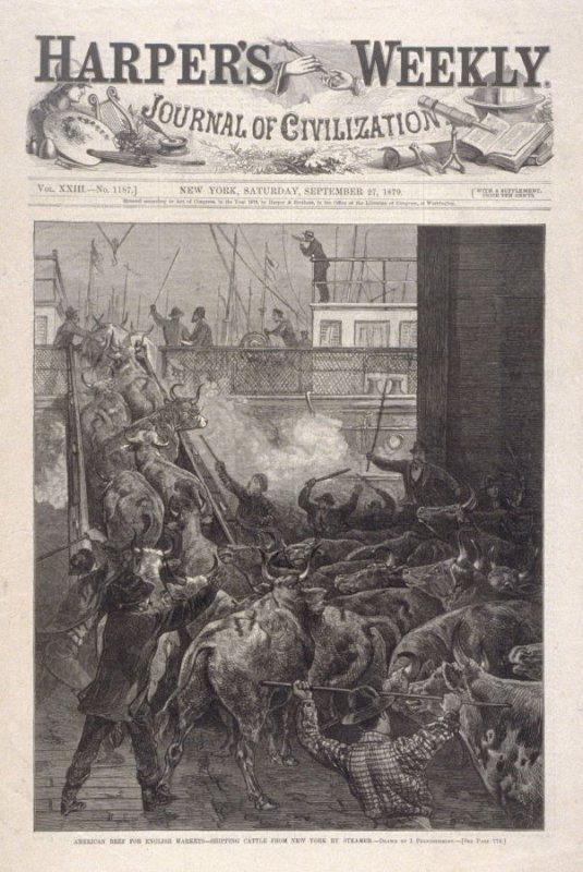 American Beef For English Markets - Shipping Cattle From New York By Steamer
