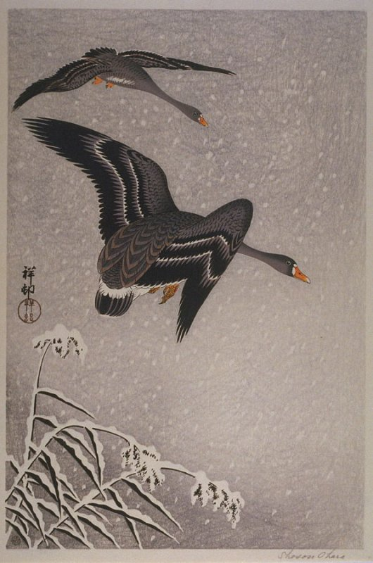 Wild Geese Flying in Snow