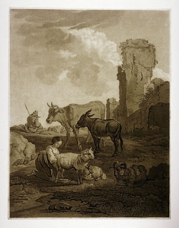 Maid milking goat, other animals with herder