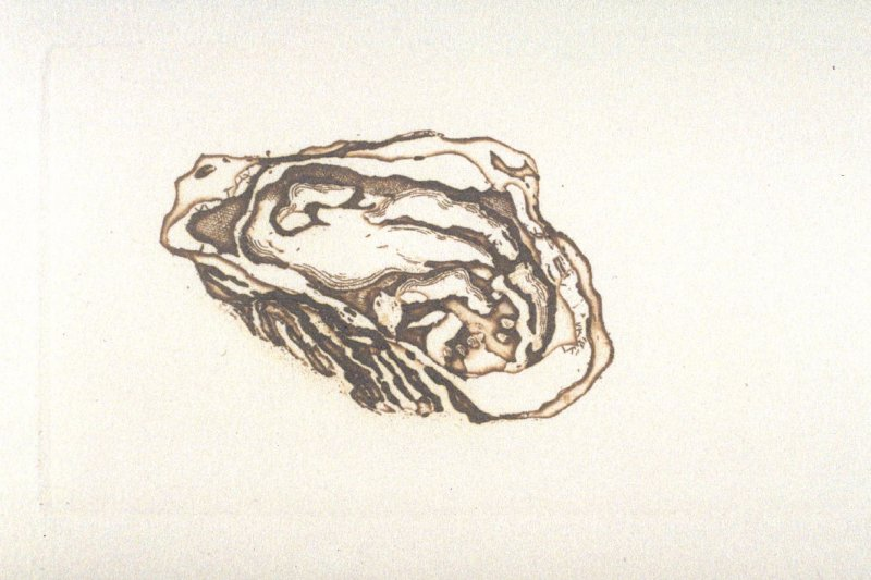 Untitled (oyster), first plate in the book Dix poèmes /Ten Poems by Francis Ponge, tr. by Serge Gavronsky (San Francisco: Greenwood Press, 1983)