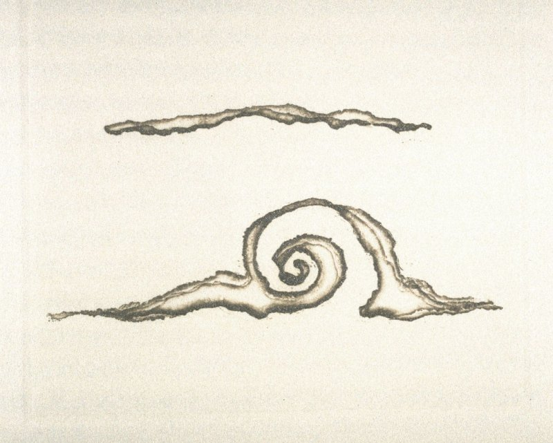 Untitled (shells), ninth plate in the book Dix poèmes /Ten Poems by Francis Ponge, tr. by Serge Gavronsky (San Francisco: Greenwood Press, 1983)
