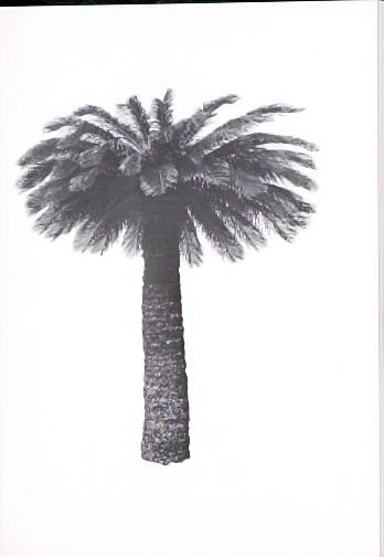 """Illustration 3, recto to """"6675 Franklin Ave.,"""" in the book A Few Palm Trees (Hollywood: Heavy Industry Publications, 1971)"""