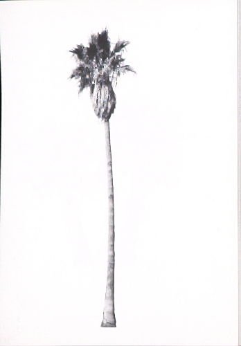 """Illustration 4, recto to """"5529 W. Sunset Blvd.,"""" in the book A Few Palm Trees (Hollywood: Heavy Industry Publications, 1971)"""