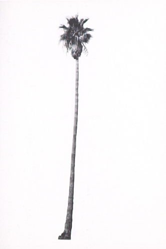 """Illustration 10, recto to """"N. E. corner of Hollywood Blvd. & La Brea Ave.,"""" in the book A Few Palm Trees (Hollywood: Heavy Industry Publications, 1971)"""