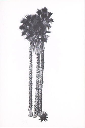 """Illustration 12, recto to """"N. E. corner of Arden Dr. & Elevado Ave.,"""" in the book A Few Palm Trees (Hollywood: Heavy Industry Publications, 1971)"""