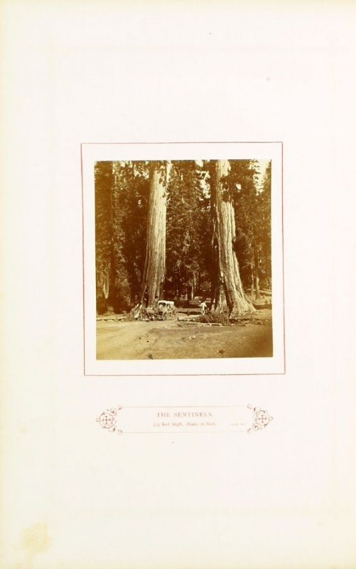 The Sentinels, 315 feet high, diam. 20 feet, opposite page 47 in the book The Wonders of the Yosemite Valley and of California by Samuel Kneeland (Boston: Alexander Moore, 1871)