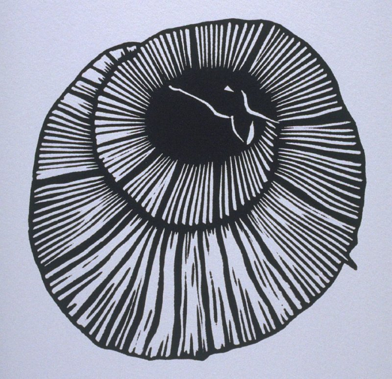 """""""Armadillo"""" in the book Bestiary by Bradford Morrow (New York: Grenfell Press, 1990)."""
