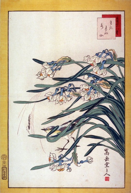 Wagtail and Narcissus (Sekirei suisen,) No. 23 from the series Forty-eight Birds Drawn from Life (Ikiutsushi yonjuhachiyo)