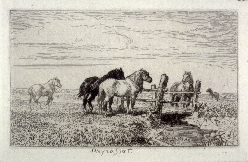 Rural scene with horses