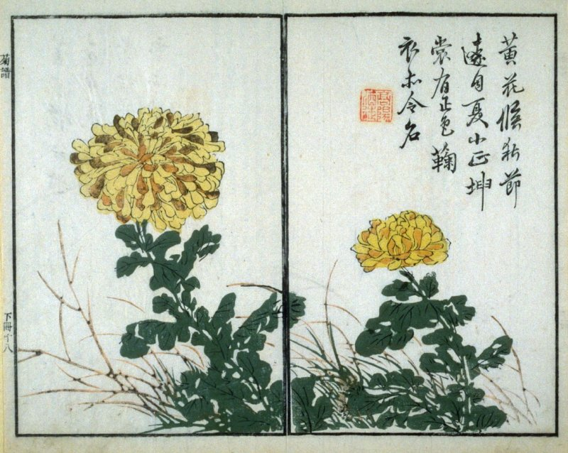 Chrysanthemums and Rock- from: The Mustard Seed Garden Manual of Painting, Volume II (on Orchids, Bamboo, Plums and Chrysanthemums)