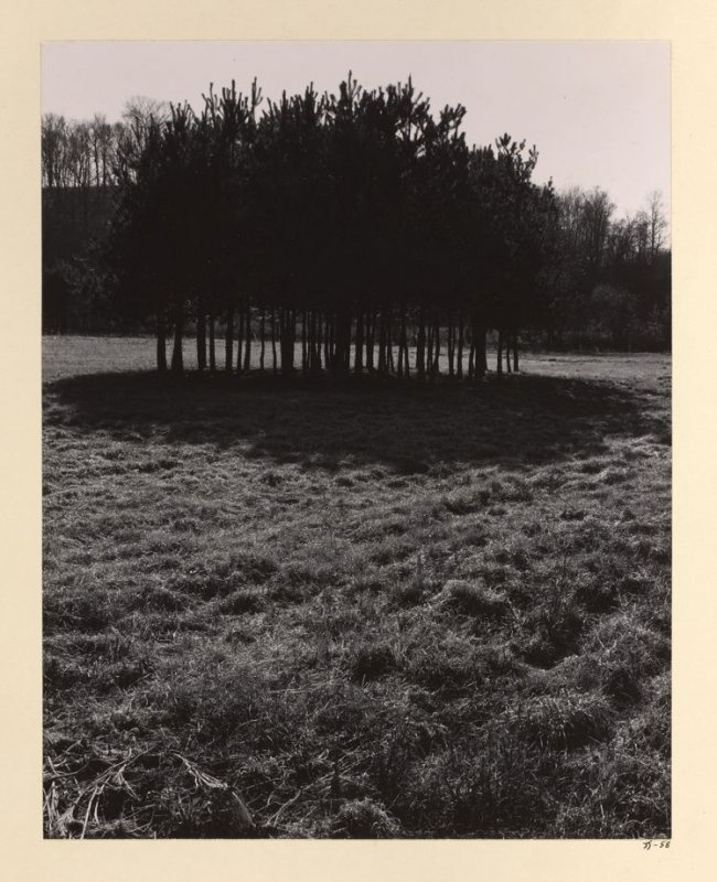Untitled (Line of trees)