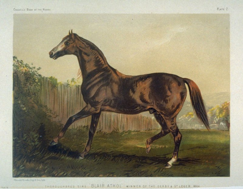 "Thoroughbred Sire ""Blair Athol""..."