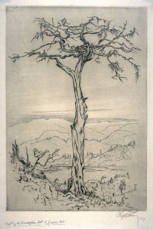 [Tree with bare branches, background of low hills]